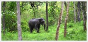 Kodagu Tourism, Coorg Tourist map,  Coorg Attractions