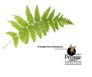 4 BHK Flat 2569 sqft Prestige Ferns Residency Resale Located at Sarjap