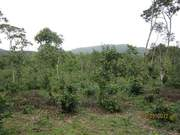 2 acre. 10 cent varga land for sale at beluval for 25 lakhs.