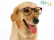 Buy dog food - Pet supplies
