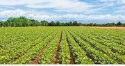 Agriculture land for sale for 2000000/ acres