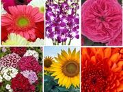 Wholesale Imported Flowers,  Bulk Imported Flowers, Buy Imported Flowers