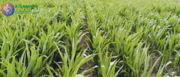 Farmer web portal - KisanMitr